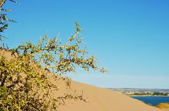 Sand dune on the way to Punta Loma Royalty Free Stock Photos