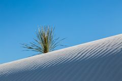 White Sands Desert, New Mexico. A sand dune and yucca plant in White Sands National Monument, New Mexico royalty free stock photos