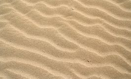 Sand dunes 1. Sand dunes on a winter beach Stock Photography