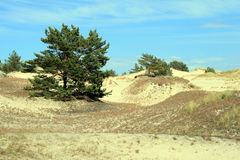 Sand dunes. And forest at Leba - Poland Royalty Free Stock Image