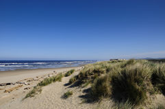 Sand Dunes. On the coast in Oregon Royalty Free Stock Photography