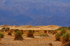 Sand Dunes. In Death Valley National Park Stock Photography