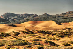 Sand dunes. Coral pink sanddunes state park Royalty Free Stock Photos