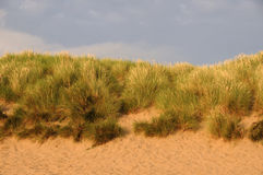 Free Sand Dunes Stock Photography - 15468592