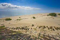 Sand Dunes. And bright blue sky. Curonian Spit, Russia stock image