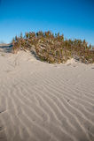Sand Dunes. Beautiful Sand Dunes on a Clear Sunny Day royalty free stock photos