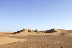 Sand dunes. Sand and rocky dunes in the sahara desert Royalty Free Stock Image