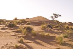 Sand dunes. In Africa, desert Royalty Free Stock Photography