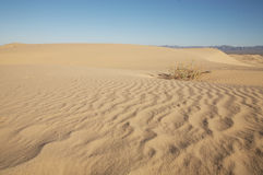 Sand Dunes. Beautiful sand dunes in Glamis California Royalty Free Stock Photo