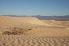 Sand Dunes. Beautiful sand dunes in Glamis California Stock Images