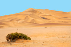 Sand dunes. On the coastline of south Africa Namibia Royalty Free Stock Photos