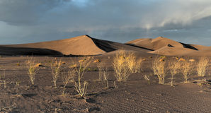 Sand Dunes along the Amargosa Desert at sunset Royalty Free Stock Photos