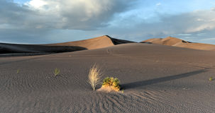 Sand Dunes along the Amargosa Desert at sunset Stock Image