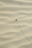 Sand dunes & animal trails. Sand dune with beetle trail Stock Photo