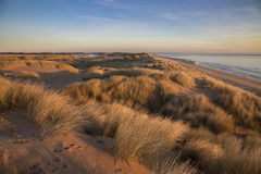 Sand Dunes of Balmedie Beach Aberdeenshire Royalty Free Stock Image