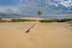 Sand dunes Baltic Sea nature Stock Photos