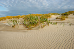 Sand dunes Baltic Sea nature Stock Photography