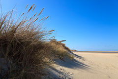 Sand dunes on the beach Stock Photos