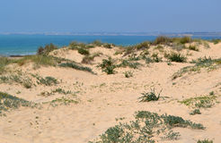 Sand dunes with beach Stock Images