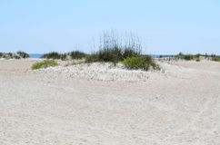 Sand dunes at beach, Florida Royalty Free Stock Image