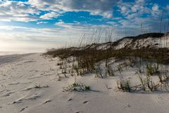First Sign of Spring on a Windswept Beach in the Gulf of Mexico stock photo