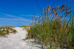 Sand dunes with beach grass Royalty Free Stock Photo