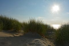 Sand dunes with beach grass at the North Sea with sun in the evening stock image