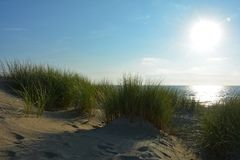Sand dunes with beach grass at the North Sea with sun in the evening royalty free stock photo