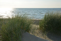 Sand dunes with beach grass at the North Sea with sun in the evening royalty free stock photography