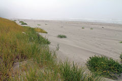Sand, Dunes, Beach Grass and the Ocean Royalty Free Stock Photo