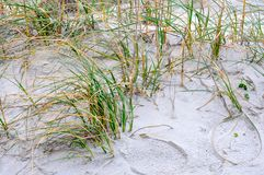Sand dunes and  beach grass on the shoreline Royalty Free Stock Photo