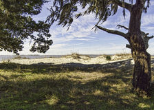 Sand dunes, beach and Jekyll Sound from under a live oak Royalty Free Stock Images