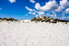 Sand dunes on a beach Royalty Free Stock Images