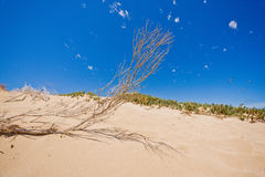 Sand dunes on the beach Royalty Free Stock Photography