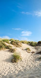 Sand dunes and blue sky, Camber Sands. Golden sand dunes with grass and clear skies, Camber Sands, England Royalty Free Stock Photography