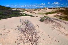 Sand dunes bu Zandvoort aan Zee Royalty Free Stock Photos