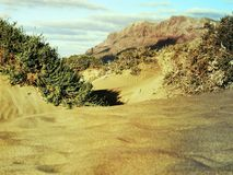 Desert landscape of the Canaries. Sand dunes in the Canaries and the sea, beach stock photo