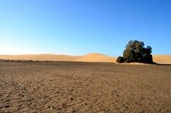 Sand dunes at the coast of Gran Canaria Stock Photos