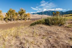 Great Sand Dunes National Park. Sand dunes in Colorado with yellow blooming flowers and cactus Stock Photos