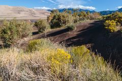 Great Sand Dunes National Park. Sand dunes in Colorado with yellow blooming flowers Royalty Free Stock Images