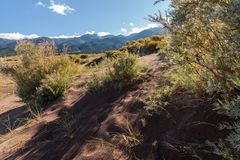 Great Sand Dunes National Park. Sand dunes in Colorado with yellow blooming flowers Royalty Free Stock Image