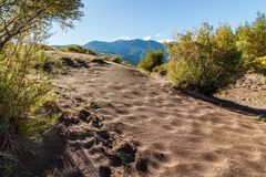 Great Sand Dunes National Park. Sand dunes in Colorado with yellow blooming flowers Stock Photos
