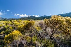 Great Sand Dunes National Park. Sand dunes in Colorado with yellow blooming flowers Royalty Free Stock Photo