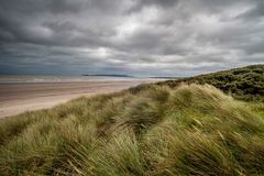 Sand dunes covered in grasses. Dune grass (and gorse) blowing beside a sandy beach with outgoing tide, and threatening gray sky Royalty Free Stock Photos