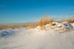 Sand dunes covered with snow Stock Photography