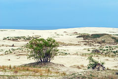 Sand dunes on the Curonian Spit Royalty Free Stock Photography