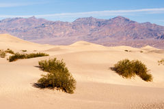 Sand Dunes Death Valley Desert Mesquite Flat Grapevine Mountains Royalty Free Stock Photography