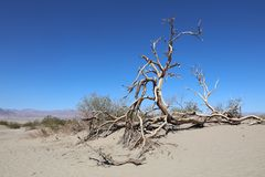 Sand Dunes in Death Valley National Park. California Royalty Free Stock Photo