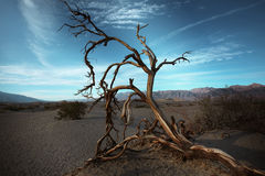 Sand dunes, Death Valley National Park. Stock Image