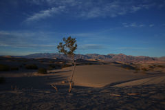 Sand dunes, Death Valley National Park. Royalty Free Stock Image